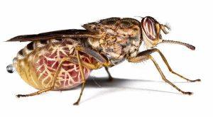insetos perigosos