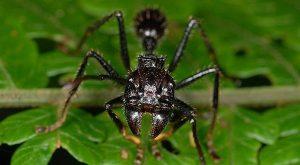 insetos perigosos Formiga Verde